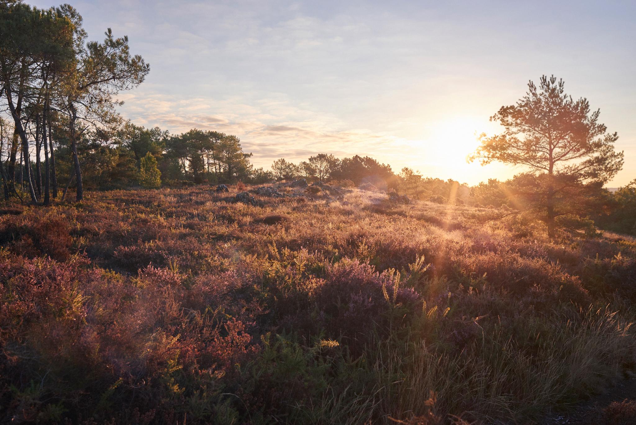 Rochefort en Terre - Les Grées - Randonnee Ballade Marche Groupe